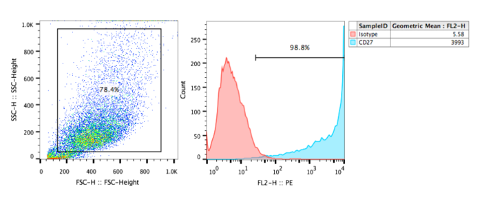 FACs analysis of human CD27 recombinant cell line.