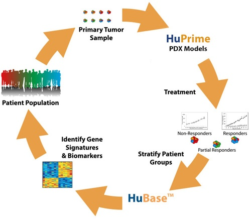 The concept of HuPrime: mouse clinical trials