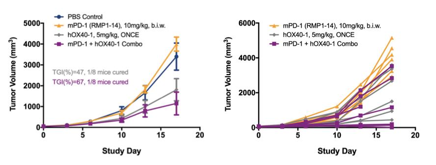 Evaluation of anti-OX40 antibodies in the HuGEMMOX40 heterozygous model