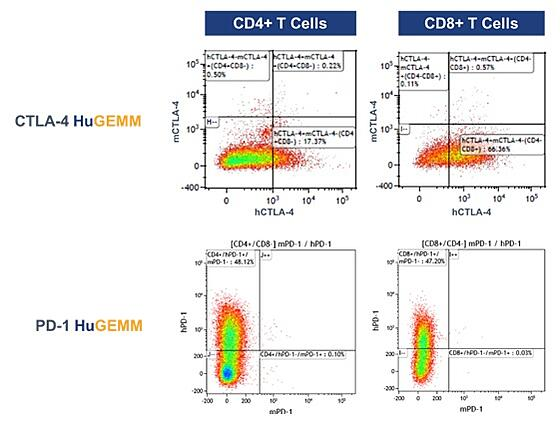 FACS analysis of human PD-1 and CTLA-4 expression in PD-1/CTLA-4 knock-in mouse
