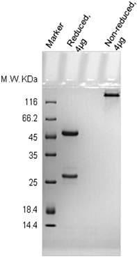 Representative QC data of isotype control antibodies