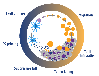 Immuno-Oncology Assays