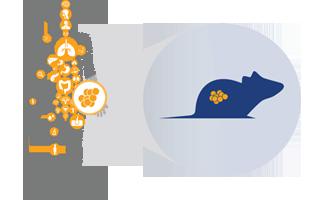 pdx-tumor-model-banner.png