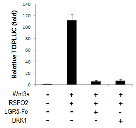 Wnt Luciferase Recombinant Cell Line Data