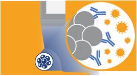 syngeneic-tumor-models-mouse-1