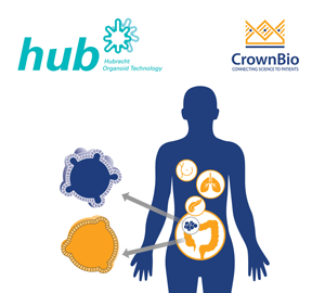 HUB Tumor Organoids with representative colorectal example