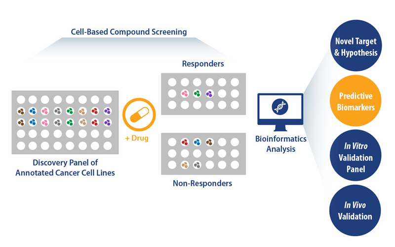 concept of a well validated, large-scale, in vitro, cancer cell line panel screening platform